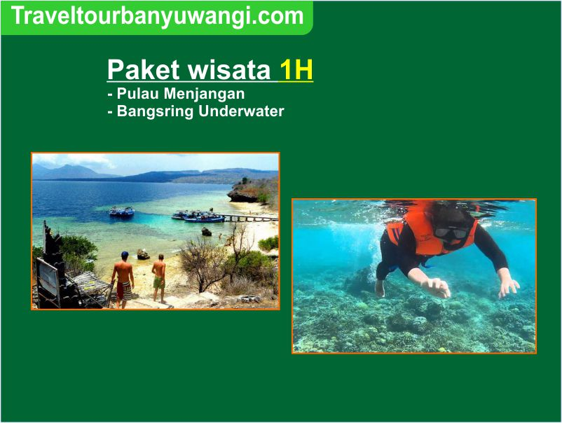 Paket wisata 1H pulau Menjangan-Bangsring Underwater